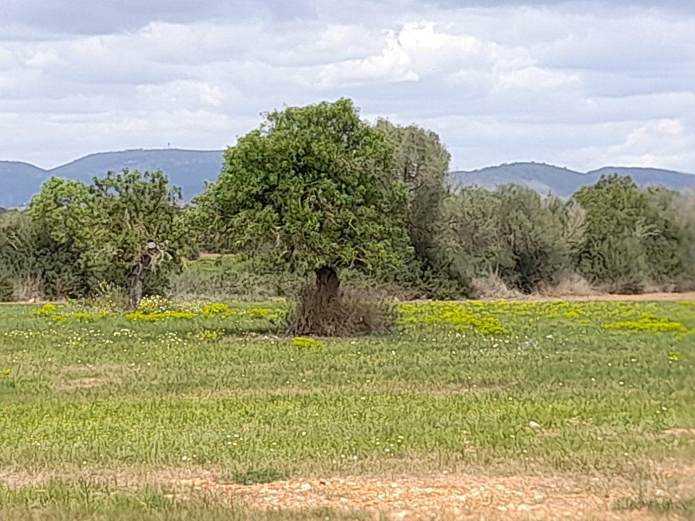 Urban plot  Campos ,área de campos. Terreno rústico en sa sorda
